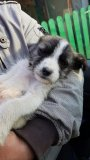 Snoopy-April-21-4